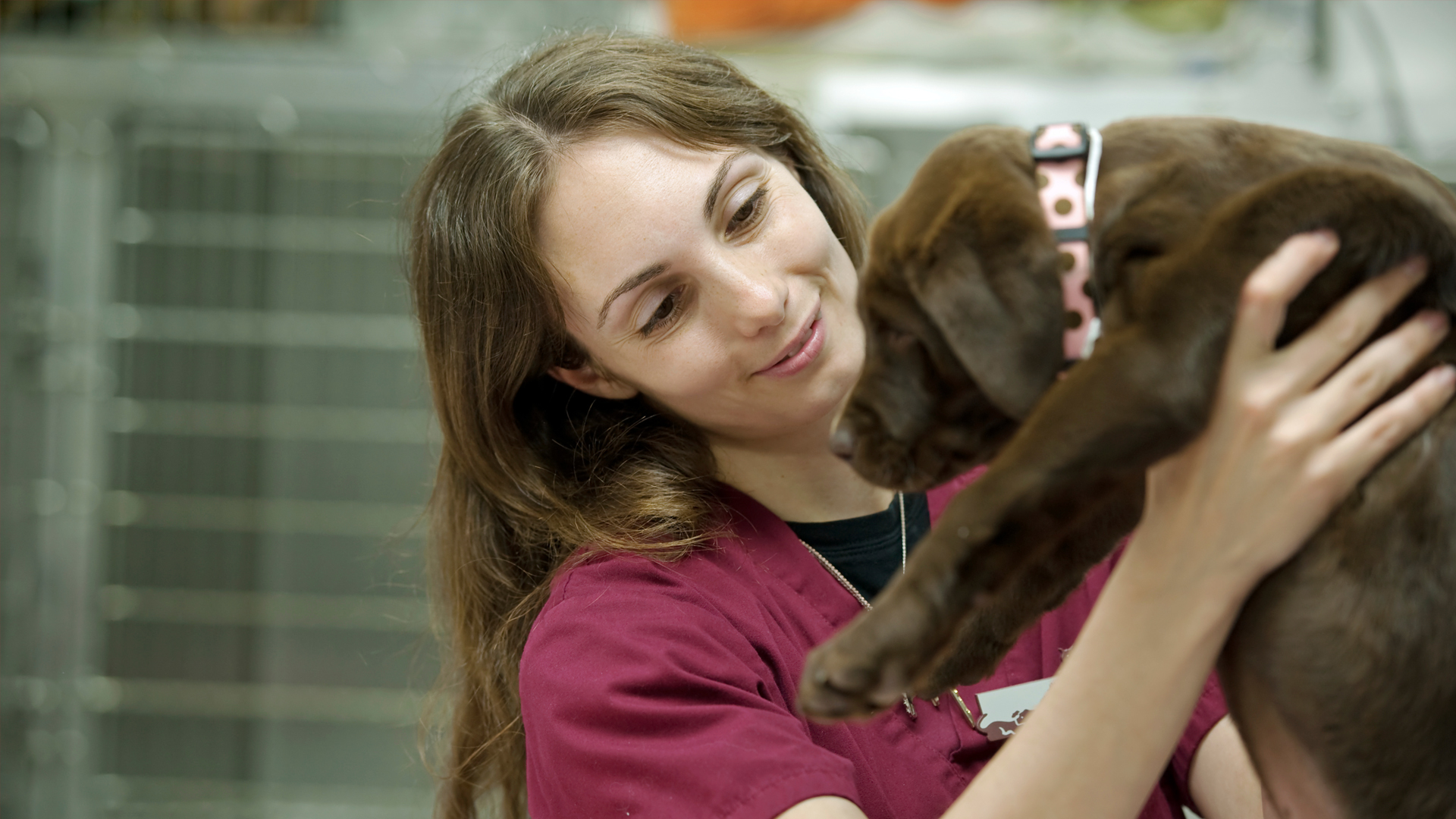 Veterinary Assistant princeton university majors